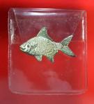 ปลาตะเพียยเงินตะเพียนทอง  หลวงปู่ทอมวัดพระขาว